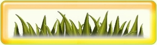 Logo-aboutflp-net.jpg