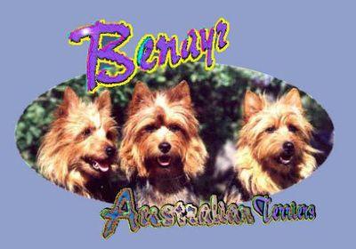 Logo-benayr-com.jpg