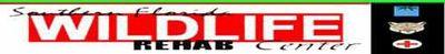 Logo-bigcats-org.jpg
