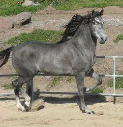 Greyhorse.jpg