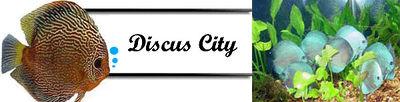 Logo-discuscity-net.jpg